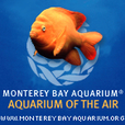 "Monterey Bay Aquarium's ""Aquarium of the Air"" show"