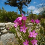 Tourcaster - Cape Town - Kirstenbosch Botanical Garden Audio Tour show