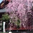 Tourcaster - Tokyo - Ueno Park Audio Tour show