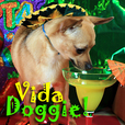 Vida Doggie - Start you and your dog's day with a little Latin Flavor.    It's one Spicy show - Pets & Animals on Pet Life Radio (PetLifeRadio.com) show