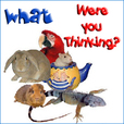 What Were You Thinking - All about exotic pets & animals you can keep as a pet - Pets & Animals on Pet Life Radio (PetLifeRadio.com) show