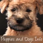 PuppiesAndDogsInfo.com show