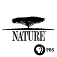 NATURE   PBS show