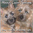 About Cairn Terriers - Dog Care and Training Tips show