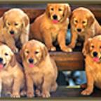 Dog Training show