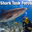 Shark Task Force show