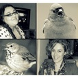 A Little Bird Told Me Freelance Writing Podcast show