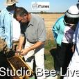 Studio Bee Live show