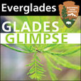 Everglades - Glades Glimpse show