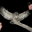 Owls and Pals show