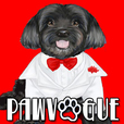 PawVogue with Cuba, America's Top-Dog - Pet Fashion on Pet Life Radio (PetLifeRadio.com) show
