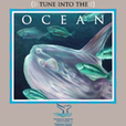 Ocean Currents Radio Program show