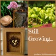 Still Growing...A Weekly Gardening Podcast show