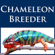 Chameleon Academy Podcast with Bill Strand show