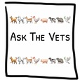 Ask The Vets show