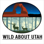 Wild About Utah show