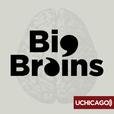 Big Brains show