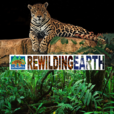 Rewilding Earth Podcast show