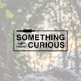 Something Curious  show