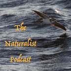 The Naturalist Podcast show
