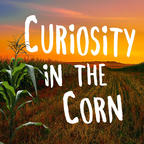 Curiosity In The Corn show